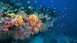 Dive The Maldives - Lily Beach