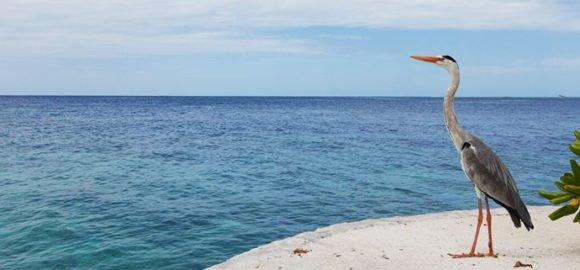 Lily Beach Maldives