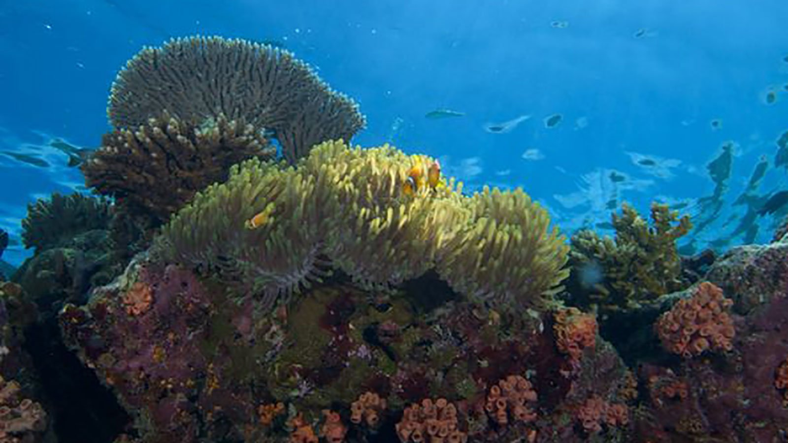 Private House Reef Snorkelling