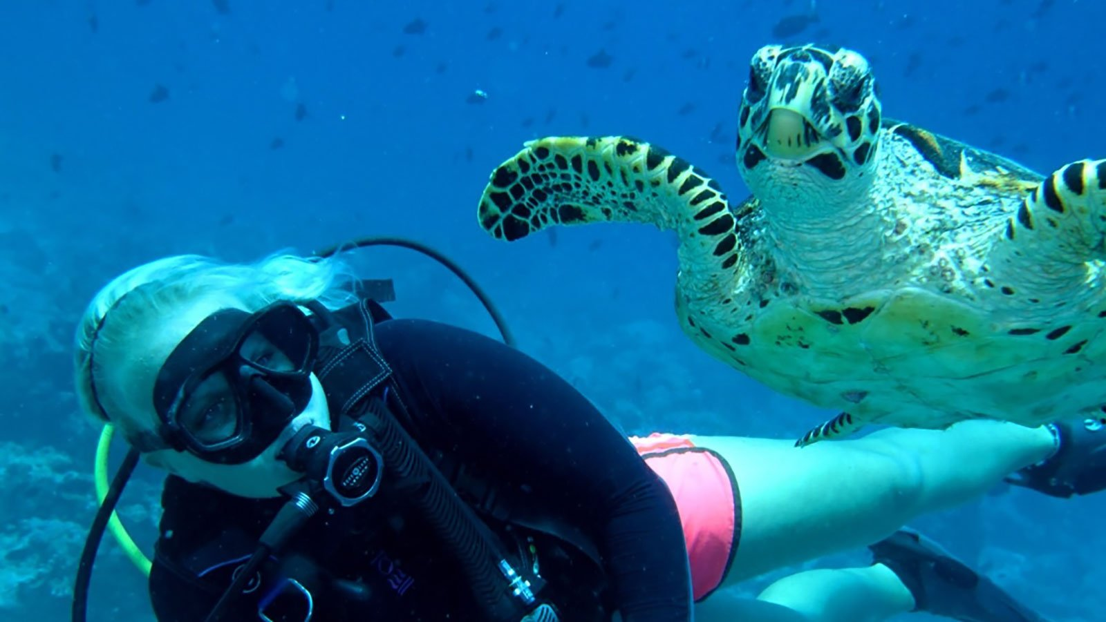 Diving Specialty Courses