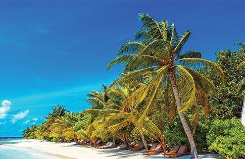 Lily Beach Maldives App