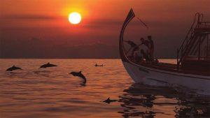 Sunset Dolphin Safari